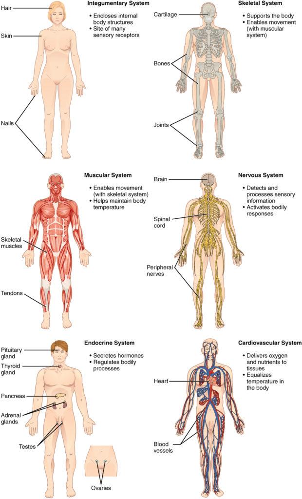 Gross Anatomy Advanced Anatomy 2nd Ed