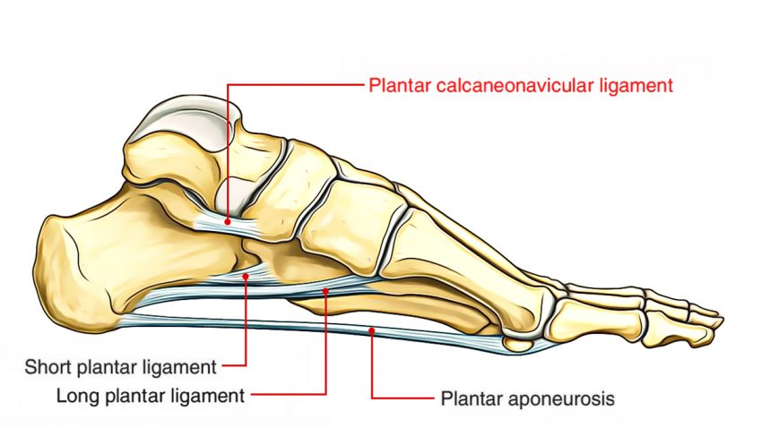 The Foot Advanced Anatomy 2nd Ed