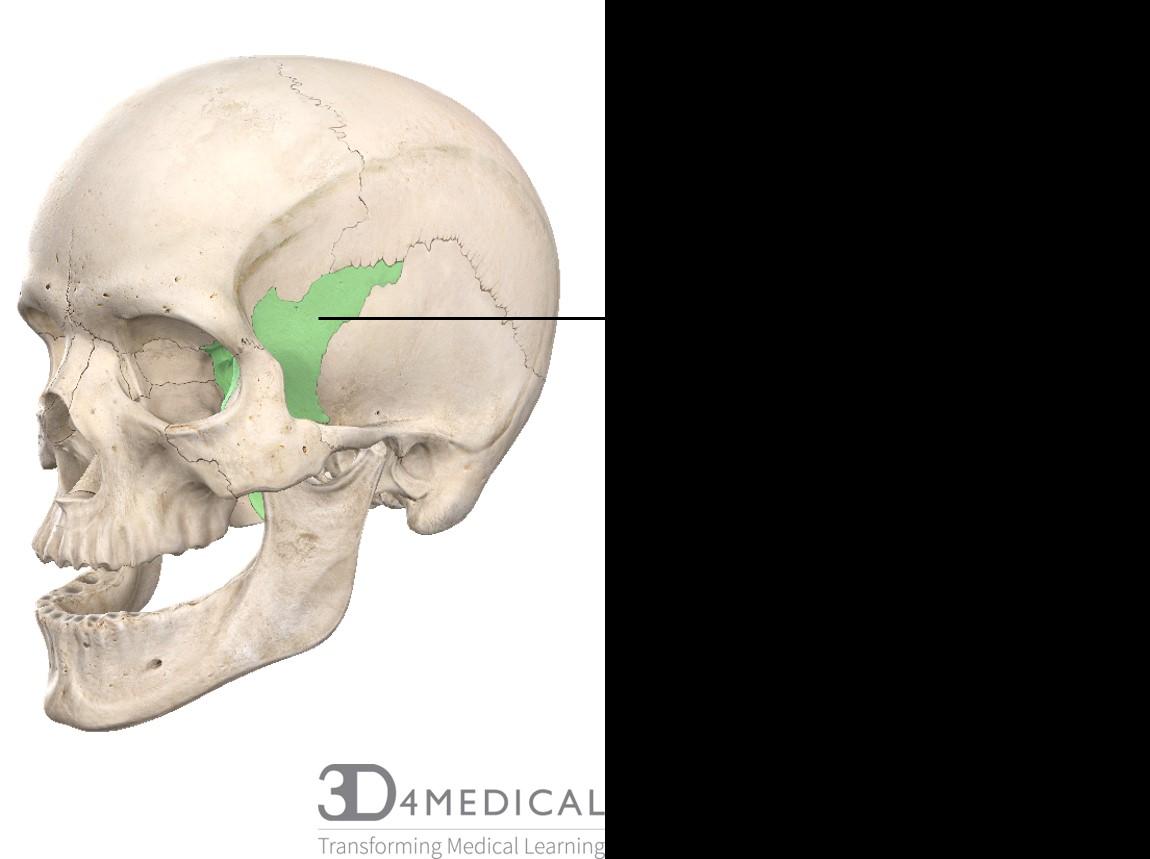 Bones Advanced Anatomy 2nd Ed