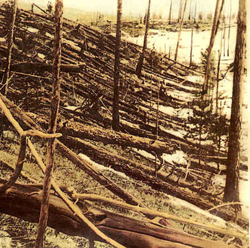 Photograph of the Aftermath of the Tunguska Explosion. Many hundreds of tress are seen pushed flat against the ground, all in the same direction.