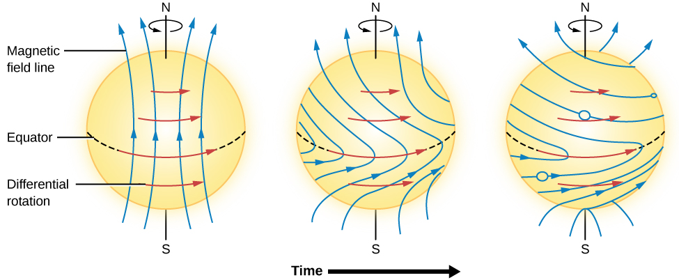 A figure illustrating how the magnetic field lines on the sun wind up. Three illustrations of the sun are shown from left to right. On the left, the magnetic lines stretch from the bottom to the top of the sun. Arrows point to the left indicating differential rotation. As time increases in the middle figure, the arrows representing the magnetic lines are pulled to the right at the sun's equator. At right the lines have morphed into loops.