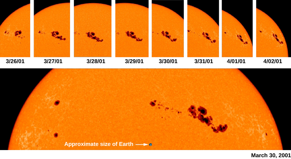 """An image of the rotation of sunspots across the sun's surface. A series of images at the top shows the movement of sunspots over time. A enlarged view of the top portion of the sun is shown at bottom, with a black dot labeled """"Approximate size of Earth""""."""