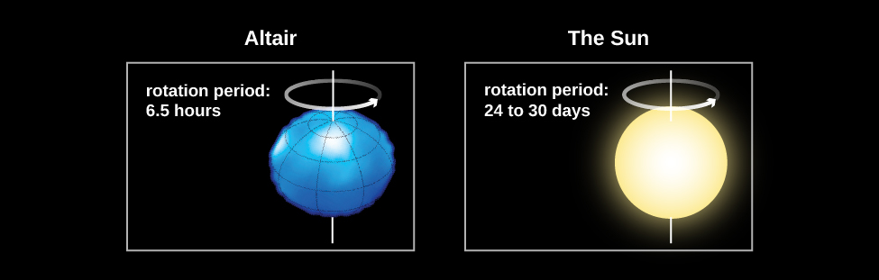 Diagram comparing stars with different rates of rotation. At left the star Altair is shown as seen looking at its equator. The rotation period is given as 6.5 hours. The star appears flattened from top to bottom and bulging outward along the equator, somewhat like an American football viewed lengthwise. At right the Sun is shown, with the rotation period given as 24-30 days. The Sun appears nearly circular.