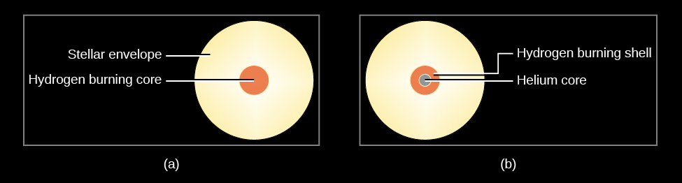 """Stellar Structure During and After the Main Sequence. In (a), on the left, the """"Hydrogen burning core"""" is shown as a small disk within a larger, yellow disk depicting the non-fusion """"Stellar envelope."""" In (b), on the right, the """"Helium core"""" is drawn as a smaller disk within a larger disk labeled, """"Hydrogen burning shell."""" These are within a larger """"Stellar envelope,"""" which is drawn in yellow."""