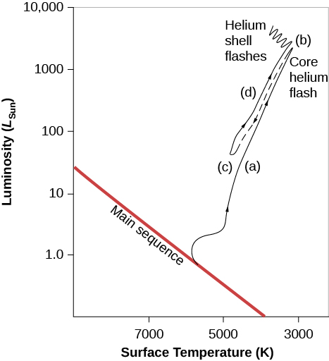 """Evolution of a Star like the Sun on an H–R Diagram. In this plot the vertical axis is labeled """"Luminosity (LSun),"""" and goes from 1.0 near the bottom to 10,000 near the top. The horizontal axis is labeled """"Surface Temperature (K),"""" and goes from 9000 on the left to 3000 on the right. The main sequence is drawn as a diagonal red line beginning at L ~ 40 on the left down to T ~ 4000 at the bottom. The evolutionary path of the star is drawn as a black line. Beginning at L = 1 and T = 5500, the line moves upward away from the main sequence. This portion of the line is labeled """"(a),"""" and is described in the caption. The line continues upward to L ~ 1000 and T ~ 3000 to point """"(b),"""" labeled """"Core helium flash."""" From point b, the line (now dashed) moves downward to L ~ 100 and T ~ 5000 and labeled """"(c),"""" and is described in the caption. From c, the line moves upward again. This portion of the line is labeled """"(d),"""" and is described in the caption. The line culminates in a series of waves near L = 5000 and T ~ 3500 and is labeled """"Helium shell flashes."""""""