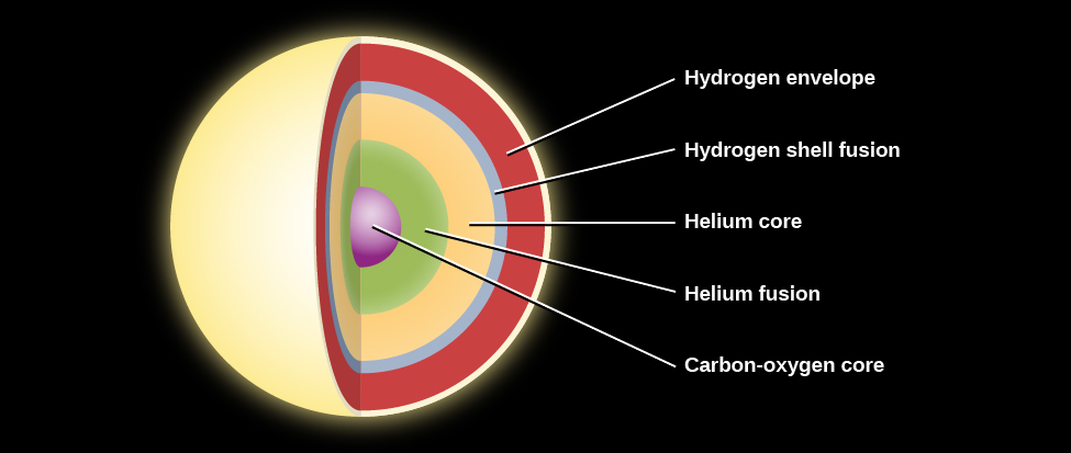 """Layers inside a Low-mass Star before Death. The layers within the core are shown as concentric circles of various colors. Starting at the center are: """"Carbon-oxygen core"""" in purple, """"Helium fusion"""" in green, """"Helium core"""" in yellow, and the """"Hydrogen shell fusion"""" layer in teal. The cooler """"Hydrogen envelope"""" is shown in orange."""