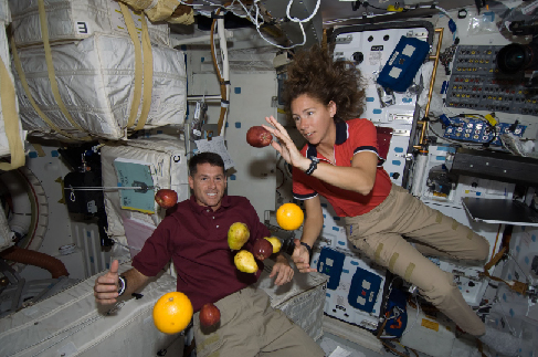 """Photograph of Astronauts Aboard the Space Shuttle Endeavour. Two astronauts are seen, along with apples, oranges and pears, """"floating"""" inside the shuttle."""