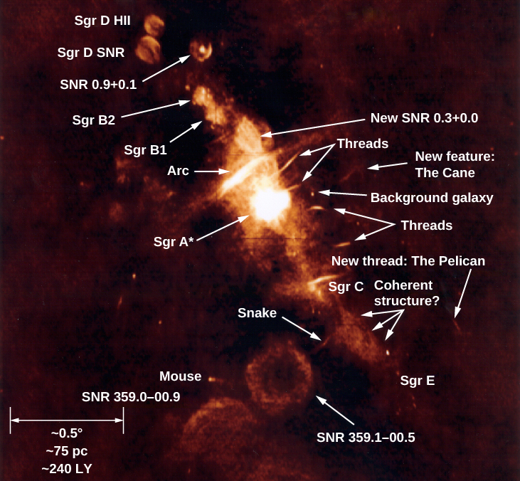 "Radio Image of Galactic Center Region. Many features are identified in this complex radio image. The scale at lower left (defined by a double headed horizontal arrow) reads: ""~0.5O ~75 pc ~240 LY"". The objects listed, from upper left to lower right, are: ""Sgr D HII"", ""Sgr D SNR"", ""SNR 0.9+0.1"", ""Sgr B2"", ""Sgr B1"", ""New SNR 0.3+0.0"", ""Arc"", ""Threads"", ""Sgr A*"", ""New feature: The Cane"", ""Background Galaxy"", ""Threads"", ""New thread: The Pelican"", ""Sgr C"", ""Coherent structure?"", ""Snake"" and ""Sgr E"". Below center, three more features are labeled (from top to bottom): ""SNR 359.1-00.5"", ""Mouse"" and ""SNR 359.0=00.9""."