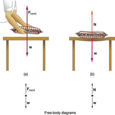 A person is holding a bag of dog food at some height from a table. He is exerting a force F sub hand, shown by a vector arrow in upward direction, and the weight W of the bag is acting downward, shown by a vector arrow having the same length as vector F sub hand. In a free-body diagram two forces are acting on the red point; one is F sub hand, shown by a vector arrow upward, and another is the weight W, shown by a vector arrow having the same length as vector F sub hand but pointing downward. (b) The bag of dog food is on the table, which deforms due to the weight W, shown by a vector arrow downward; the normal force N is shown by a vector arrow pointing upward having the same length as W. In the free-body diagram, vector W is shown by an arrow downward and vector N is shown by an arrow having the same length as vector W but pointing upward.