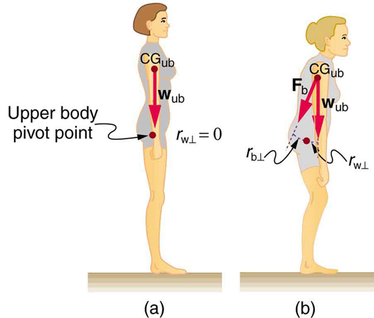 In part a of the figure, a side view of a girl standing on a surface is shown. The weight of the girl is acting vertically downward and is in the line with her hips. A point above her legs is marked as the pivot point. The weight vector is in the direction of the pivot. In part b, a side view of a girl standing on a surface is shown. The girl is bending slightly toward her front. The weight of her upper body is acting downward and the line of action of weight is not passing through the upper body pivot point.