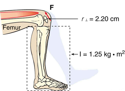 The figure shows a human leg, from the thighs to the feet which is bent at the knee joint. The radius of curvature of the knee is indicated as r equal to two point two zero centimeters and the moment of inertia of the lower half of the leg is indicated as I equal to one point two five kilogram meter square. The direction of torque is indicated by a red arrow in anti-clockwise direction, near the knee.
