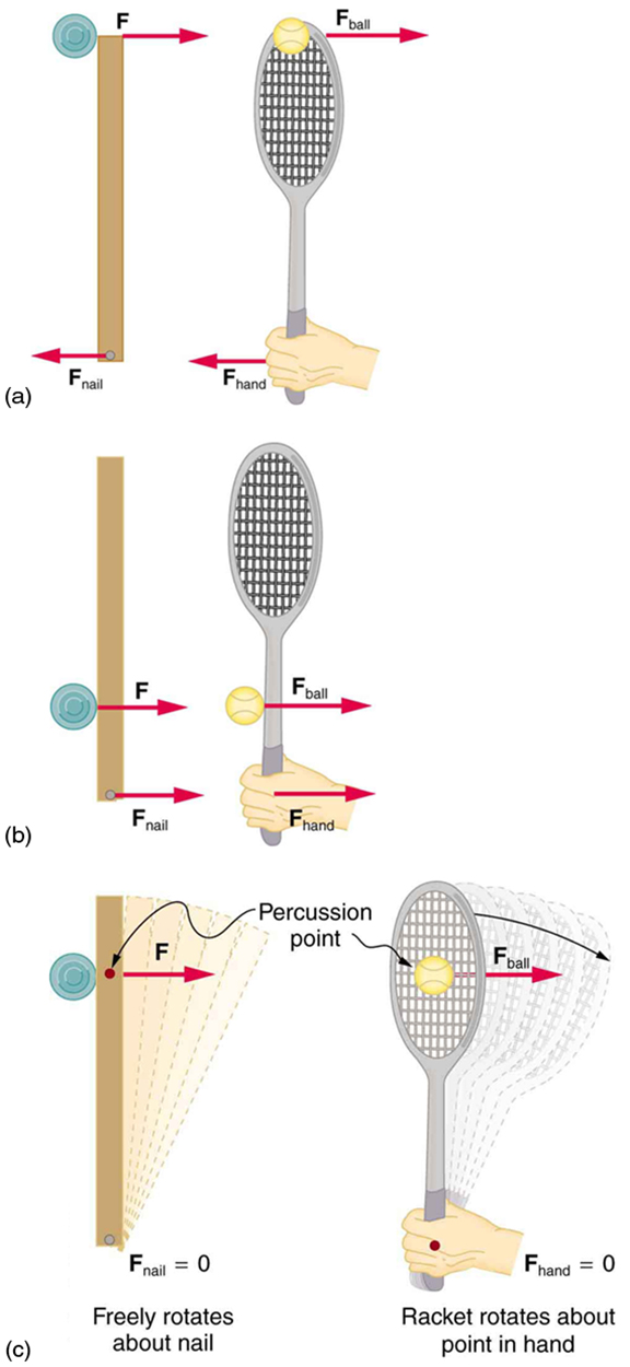 In figure a, a disk hitting a stick is compared to a tennis ball being hit by a racquet. When the ball strikes the racquet near the end with a force denoted by f ball as shown by the direction of the arrow, a backward force, f hand is exerted on the hand, In figure b, when the racquet is struck much farther down by a force F ball, a forward force, f hand is exerted on the hand as shown by the arrows. In figure (c), when the racquet is struck by the ball with a force f ball at the percussion point, no force is delivered to the hand. This implies that f hand is equal to zero.