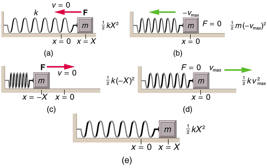The given figure (a) shows a spring on a frictionless surface attached to a bar or wall from the left side and on the right side of the spring, there is an object attached with mass m. Its amplitude is given by X, and X is equal to zero at the equilibrium level. Force F is applied to it from the right side, represented by a red arrow pointing toward the left and velocity v is equal to zero. An arrow showing the direction of force is also given alongside this figure as well as with the other four figures. The energy of the object is half k x squared. In the given figure (b), after force is applied, the object moves to the left, compressing the spring slightly. The displacement of the object from its initial position is indicated by dots. The force F, here is equal to zero and velocity v, is maximum in the negative direction or the left. The energy of the object in this case is half m times negative v-max whole squared. In the given figure (c), the spring has been compressed the maximum limit, and the amplitude is minus X. Now the force is toward the right, indicated here with a red arrow pointing to the right and the velocity, v, is zero. The energy of the object now is half k times negative x whole squared. In the given figure (d), the spring is shown released from its compressed position and the object has moved toward the right side to reach the equilibrium level. Here, F is equal to zero, and the velocity, v, is the maximum. The energy of the object becomes half k times v max squared. In the given figure (e), the spring has been stretched loose to the maximum possible limit and the object has moved to the far right. Now the velocity v, here is equal to zero and the direction of force is toward the left. As shown here, F is equal to zero. The energy of the object in this case is half k times x squared.