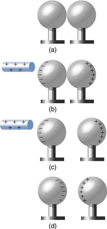 In part a, a pair of neutral metal spheres are in contact. In part b, a rod with positive signs is close to one surface of the sphere and the negative signs are shown on this surface toward the rod and positive signs are shown on the outermost face of the other sphere. In part c, the rod and the spheres are not in contact. The outermost surface of one sphere has negative signs and the outermost surface of another sphere has positive signs. In part d, the glass rod is not shown. The inner surfaces of the metallic spheres have opposite charges. One sphere has negative signs and the other has positive signs facing each other.