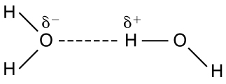 Molecular structure of two water molecules is shown. Oxygen atom of one water molecule has minus delta on it and the Hydrogen atom of other water molecule has a positive delta charge on it. The force on attraction between these two atoms is shown as dotted line.