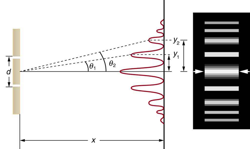 The figure consists of two parts arranged side-by-side. The diagram on the left side shows a double slit arrangement along with a graph of the resultant intensity pattern on a distant screen. The graph is oriented vertically, so that the intensity peaks grow out and to the left from the screen. The maximum intensity peak is at the center of the screen, and some less intense peaks appear on both sides of the center. These peaks become progressively dimmer upon moving away from the center, and are symmetric with respect to the central peak. The distance from the central maximum to the first dimmer peak is labeled y sub one, and the distance from the central maximum to the second dimmer peak is labeled y sub two. The illustration on the right side shows thick bright horizontal bars on a dark background. Each horizontal bar is aligned with one of the intensity peaks from the first figure.