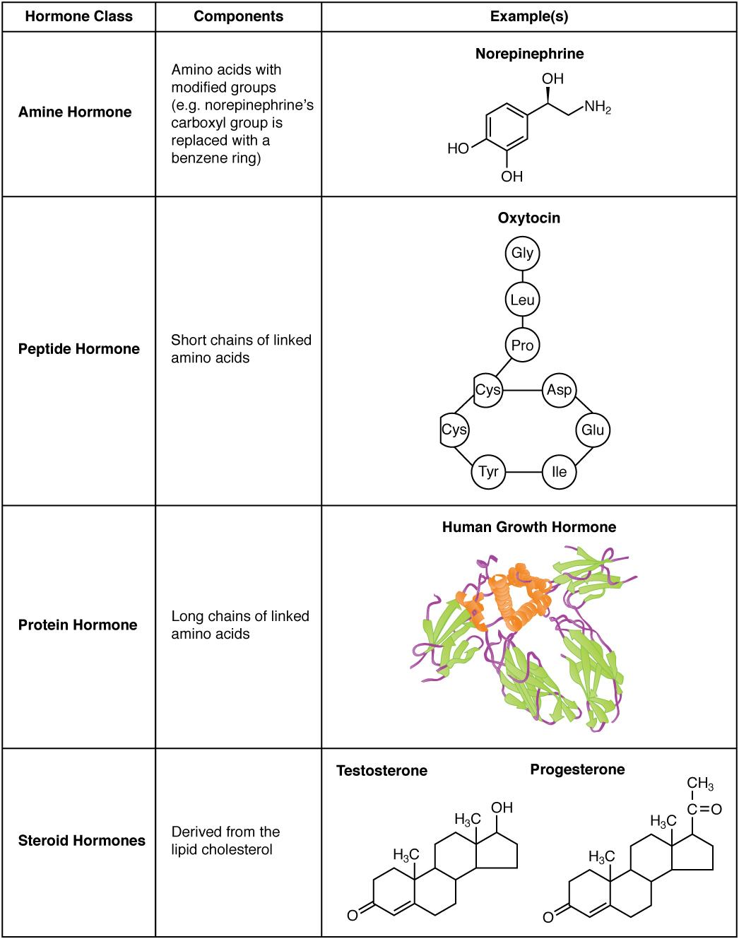 172 Hormones Douglas College Human Anatomy And Physiology Ii