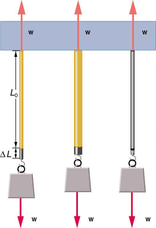 Diagram of weight w attached to each of three guitar strings of initial length L zero hanging vertically from a ceiling. The weight pulls down on the strings with force w. The ceiling pulls up on the strings with force w. The first string of thin nylon has a deformation of delta L due to the force of the weight pulling down. The middle string of thicker nylon has a smaller deformation. The third string of thin steel has the smallest deformation.