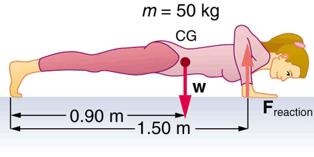 A woman is doing push-ups. Her weight w is acting on her center of gravity , shown by a vector pointing downwards. Her center of gravity is zero point nine zero meters from her feet and reaction force F acting on her arms is shown by the vector pointing upward along her arms. The distance of reaction force from the feet is one point five zero meters.