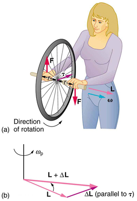 In figure a, a lady is holding the spinning bike wheel with her hands. The wheel is rotating in counter clockwise direction. The direction of the force applied by her left hand is shown downward and that by her right hand in upward direction. The direction of angular momentum is along the axis of rotation of the wheel. In figure b, addition of two vectors L and delta-L is shown. The resultant of the two vectors is labeled as L plus delta L. The direction of rotation is counterclockwise.