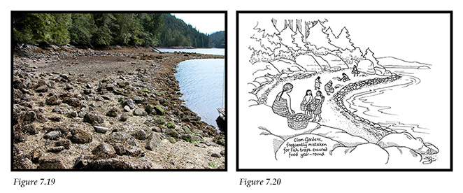 Tracey Island clam garden showing raised wall and families depicted in clam garden