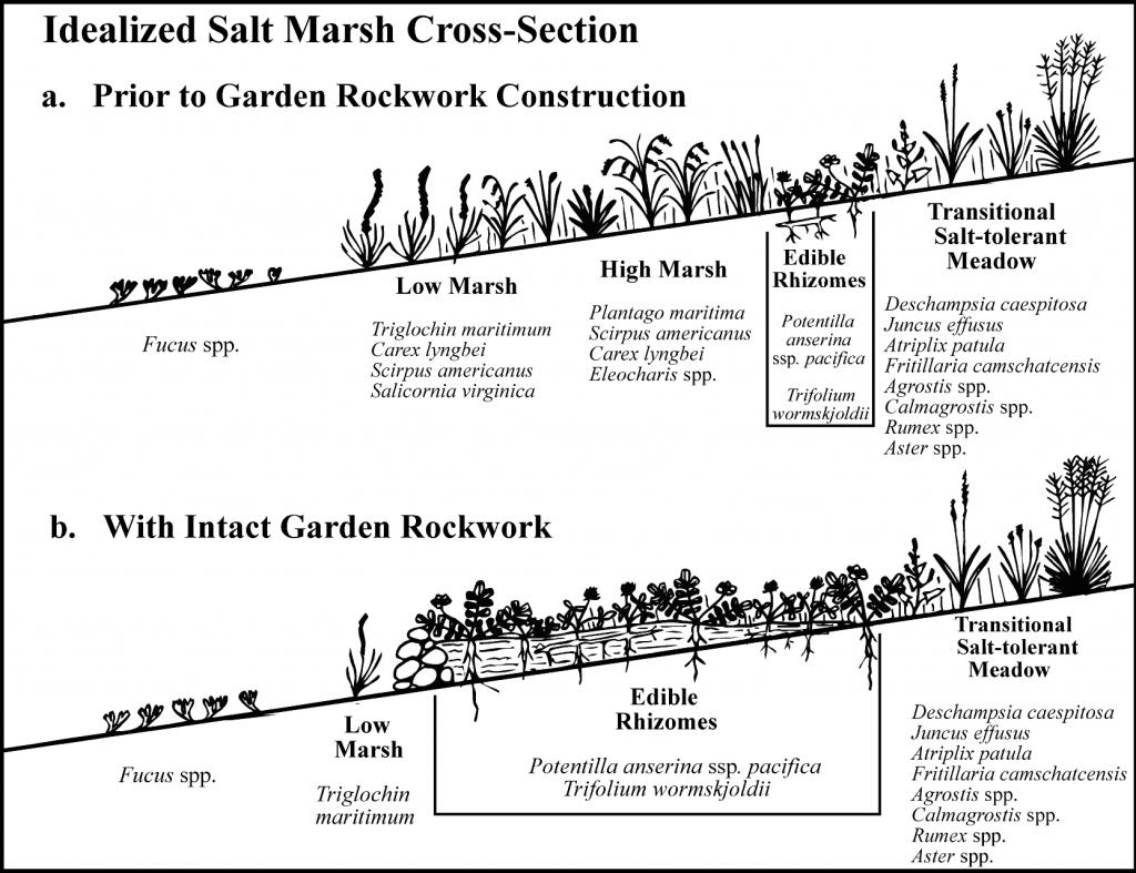 Idealized salt marsh cross-section