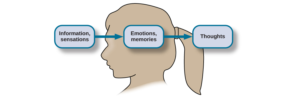 """The outline of a human head is shown. There is a box containing """"Information, sensations"""" in front of the head. An arrow from this box points to another box containing """"Emotions, memories"""" located where the person's brain would be. An arrow from this second box points to a third box containing """"Thoughts"""" behind the head."""