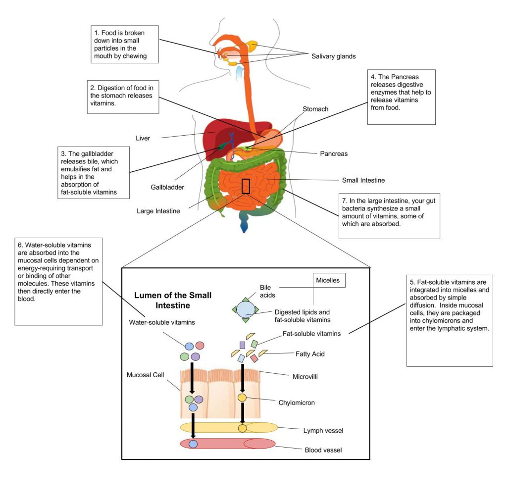 Are Vitamin Supplements Absorbed By The Body