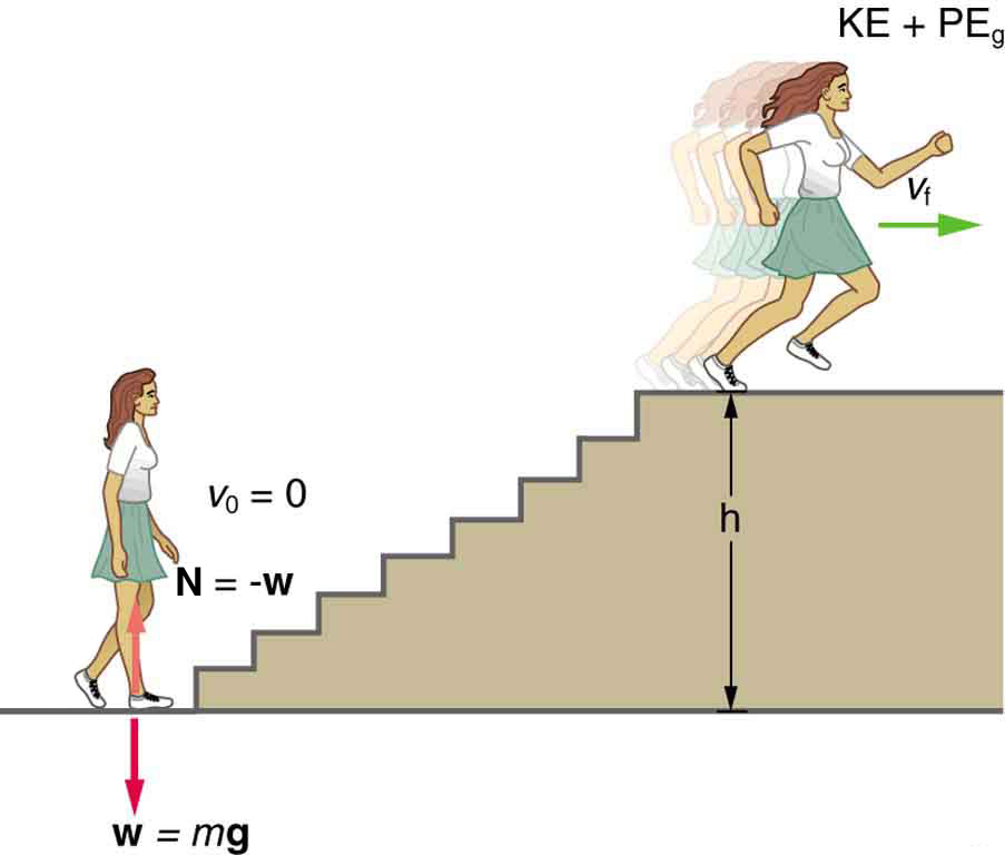 A woman is standing before a set of stairs with her weight shown by a vector w pointing vertically downward, which is equal to m times g. The normal force N acting on the woman is shown by a vector pointing vertically upward, which is equal to negative w. Her velocity at this point is v sub 0 equal to zero. She runs and reaches the top of the stairs at a height h with velocity v sub f. Now she possesses potential energy as well as kinetic energy labeled as K E plus P E sub g.
