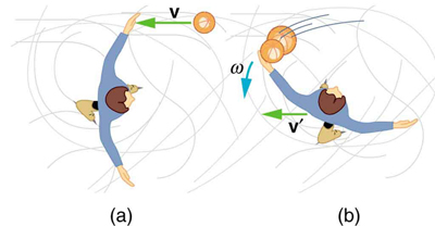 Figure a shows a skater through an overhead view with both his hands outstretched. A ball is seen approaching toward him in air with velocity v. Figure b shows that skater catching two balls in his left hand, and then, recoiling toward the left, in clockwise direction, with angular velocity omega and finally, the balls have velocity v prime.