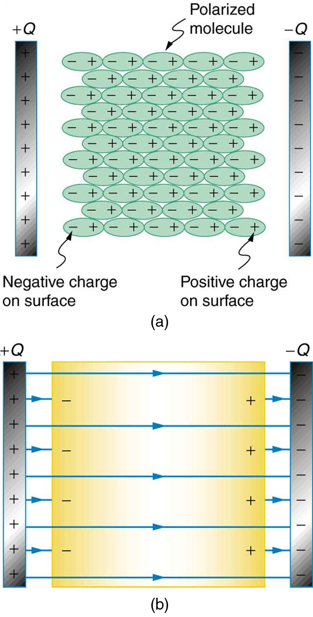 (a) A dielectric is between the two plates of a parallel plate capacitor. A diagram shows the molecules that make up the dielectric. The molecules are polarized by the charged plates. The positive ends of the molecules are attracted toward the negatively charged plate of the capacitor and hence are oriented toward the right. The negative ends of the molecules are attracted toward the positively charged plate of the capacitor and hence are oriented toward the left. (b) There is a dielectric material between the two plates of the capacitor. Since the charged ends of the molecules are oriented toward the capacitor plates, there is reduced field strength inside the capacitor, resulting in a smaller voltage between the plates for the same charge.
